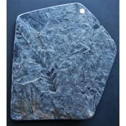 Pflanzen Fossil