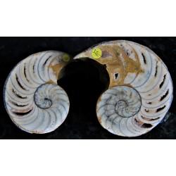Nautilus geschnitten und poliert